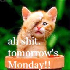 Tomorrow Is Monday Funny Quotes Tomorrow's monday !