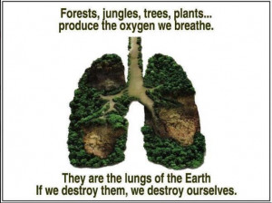Forests jungles trees plants produce the oxygen we breathe