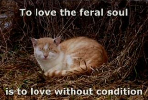 """To Love the Feral Soul is to Love without Condition"""""""