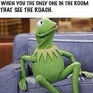Funny-Memes-Kermit-The-Frog-8.jpg