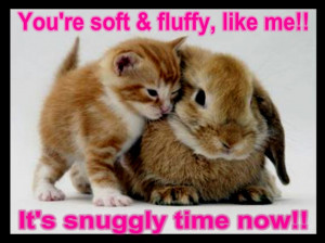 ... Happiness: Funny Quotes And Sayings With Picture Of The Cat And Rabbit