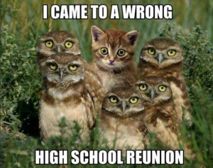 Cat meme – I came to the wrong high school reunion