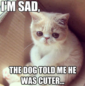 Cute kitten: I'm sad - the dog told me he was cutter...