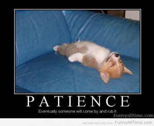 PATIENCE EVENTUALLY SOMEONE WILL COME BY AND RUB IT