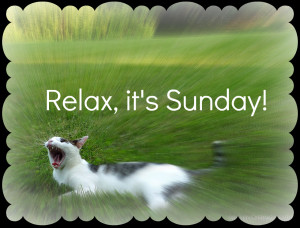 odin-cat-garden-yawn-quotes-relax-sunday
