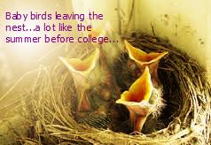 baby bird leaving the nest