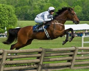 Horse Racing Steeplechase