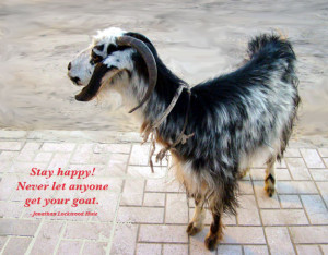 Stay Happy, never let anyone get your goat.