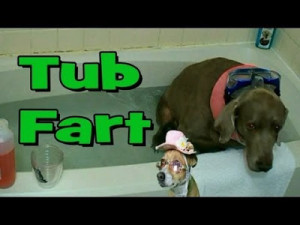 bathtub-fart-funny-dog-farts-underwater-with-funny-dogs-commentary_20 ...