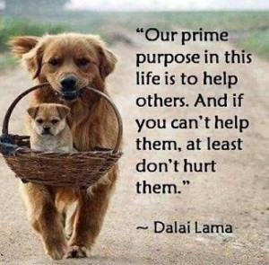 Piccsy :: Love And Compassion Quotes From Dalai Lama