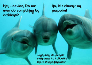 funny dolphins sharks thinkthat dolphins are