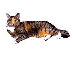cat-clip-art-lying-cat.jpeg