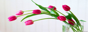 tulip timeline cover flowers timeline cover timeline covers pink tulip ...