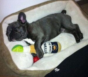 ... More Cute Pictures! (french bulldog,corona chew toy,adorable,puppy