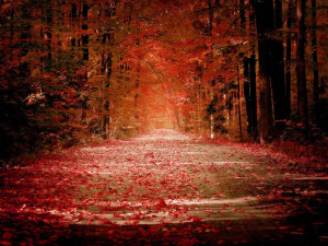 The beauty of crimson fall foliage and a 'red' road in autumn ...