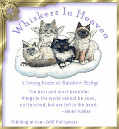 sympathy for pets death | Pet Loss Guestbook Graphics by the Pet ...