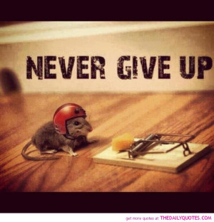funny-cute-pictures-never-give-up-quote-motivational-quotes-pics.jpg
