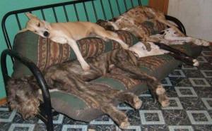 搞笑狗狗睡觉图片