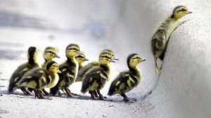 Follow the Leader (Make that change)