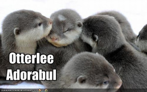 found a cache of otter puns who doesn t love otter puns