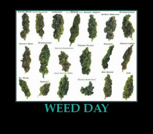 weed quotes for myspace , weed plant drawing ,