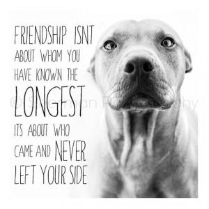 Pitbull Print - Dog Photography - Pitbull Inspirational Words - Black ...