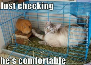 funny hamster quotes 1 x 1 funny images hamster edition cute hamster ...