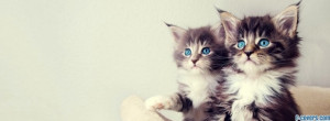 cute kittens facebook cover for timeline