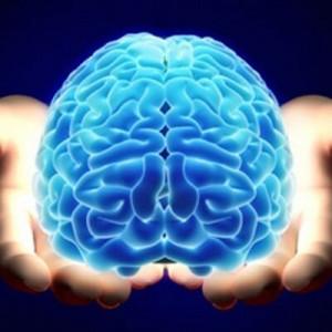 neuroscience verified account neuroscience tweets 1239 following 2885 ...