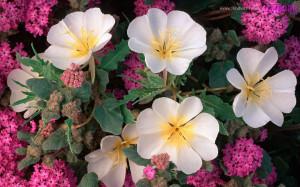 Cute Flowers Tumblr