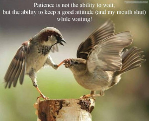 Patience Is Not The Ability To Wait