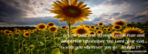 Bold Sunflowers Cover Comments