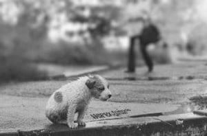 Homeless Animals