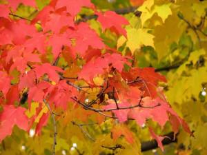 Fall Quotes: 14 Inspirational Autumn Sayings #diamondcandles # ...