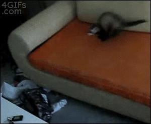 Overzealous Ferret...