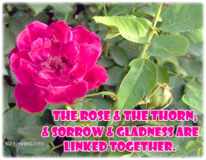 The Roses & The Throns