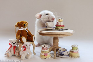 Adorable: This rat settles down with some cuddly friends for afternoon ...