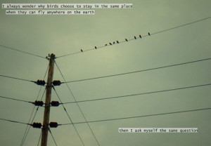 Funny photos birds wire inspirational quote