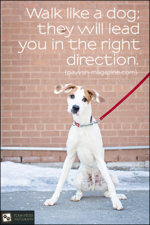 Pet Adoption Quotes http://pawsh-magazine.com/2013/03/as-dogs-would ...