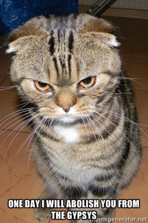 angry cat 2 - ONE DAY I WILL ABOLISH YOU FROM THE GYPSYS