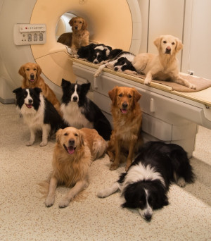 Dogs gathered around MRI scanner MR Research Center in Budapest. Image ...