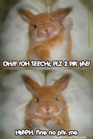 Funny Cute Rabbits – Funny Cute Rabbit Picture 077 (FunnyPica.com)