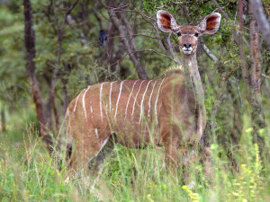 In South Africa, Ranchers Are Breeding Mutant Animals to Be Hunted