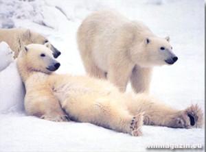 Bajka o topících se ledních medvědech