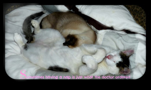 quote-cats-sleeping-cat nap