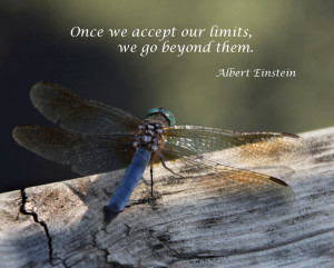 ... quotes dragonfly quotes dragonfly love quotes meditation quotes