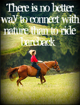 ... for this image include: horse, equestiranquote, free, love and natural
