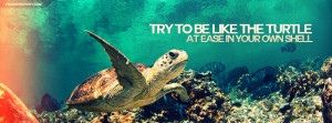Try To Be Like The Turtle Quote Picture