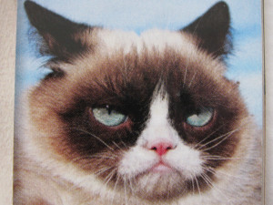 Grumpy Cat Quotes No I also would love grumpy cat.