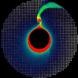binary fission definition